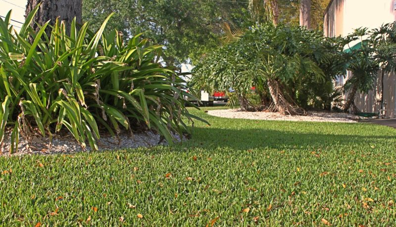 Palmetto Grass with Leaves and Shade by Tree